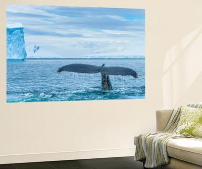A Humpback Whale Tail Near Paradise Harbor, Antarctica