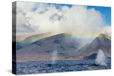 Humpback Whales Surface under a Rainbow over Distant Mountains