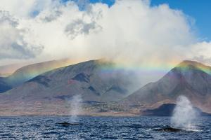 Humpback Whales Surface under a Rainbow over Distant Mountains by Ralph Lee Hopkins