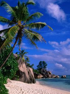 Palm Tree on Beach, Anse Source D'Argent, Seychelles by Ralph Lee Hopkins