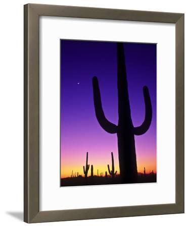 Sonoran Desert at Twilight with Saguaro Cacti and Crescent Moon, Saguaro National Monument, Arizona