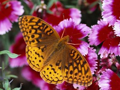 Butterfly Landing on Flowers