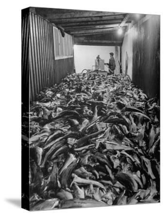 Men Packing a Ship with Freshly Caught Cod Fish