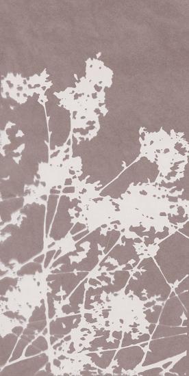 Ramble in Grey-Sarah Cheyne-Giclee Print