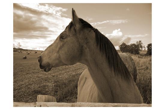 Ranch-Sheldon Lewis-Photographic Print