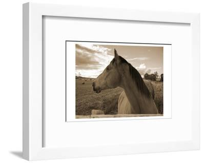 Ranch-Sheldon Lewis-Framed Photographic Print