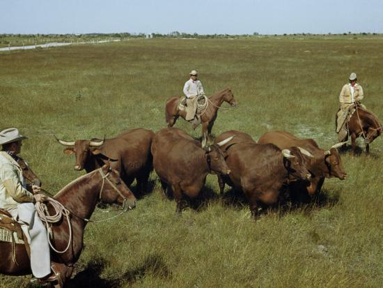 Rancher and Cowboys Inspect Grass-Fattened Steers-Justin Locke-Photographic Print