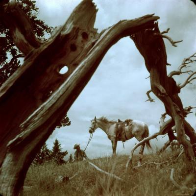 Rancher Leading Horse Across Field as Seen Through Branches of Fallen Tree, Trinchera Ranch-Loomis Dean-Photographic Print