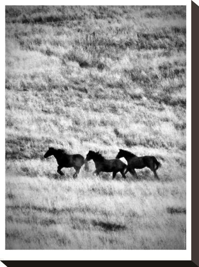 Ranchland #4 Bw-Murray Bolesta-Stretched Canvas Print