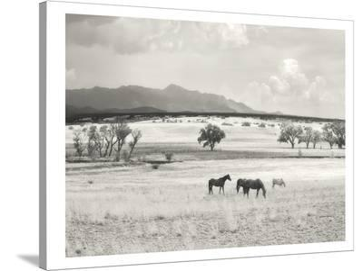 Ranchland #9A-Murray Bolesta-Stretched Canvas Print