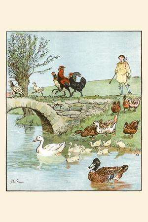 Farmer's Boys Leads the Chickens and Ducks