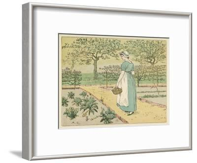 Girl Working in a Rural Kitchen Garden Collecting Cabbages