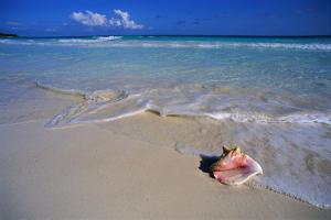 Conch Shell on Quiet Beach by Randy Faris