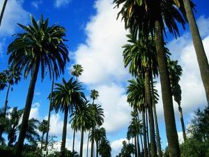Palm Trees Lining Street by Randy Faris