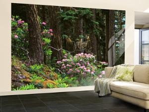 Rhododendrons and Trees, Washington State, USA by Randy Green