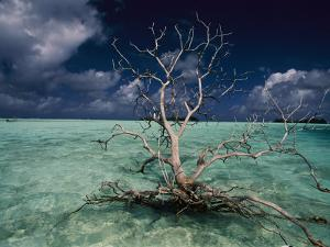 A Tree Floats in the Crystal-Clear Waters of Palmyra Atoll by Randy Olson