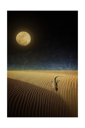 Lizard Moon