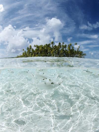 Rangiroa, Tuamotu Archipelago, French Polynesia, Pacific Islands, Pacific-Sergio Pitamitz-Photographic Print