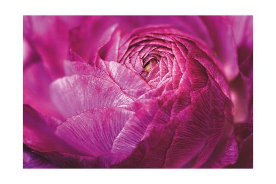 Ranunculus Abstract V Color-Laura Marshall-Art Print