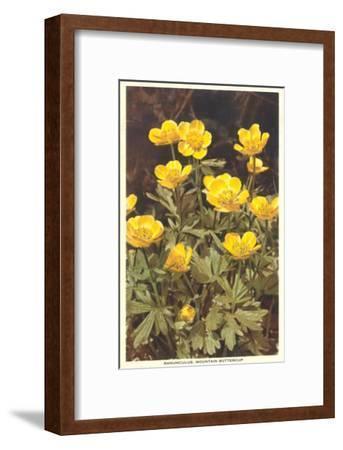 Ranunculus, Mountain Buttercup