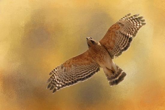 Raptors Afternoon Flight-Jai Johnson-Giclee Print