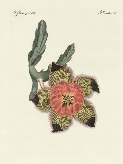 Rare African Plants--Giclee Print