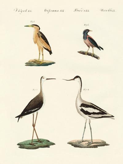 Rare German Birds--Giclee Print