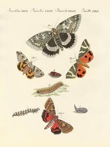 Rare German Night Butterflies