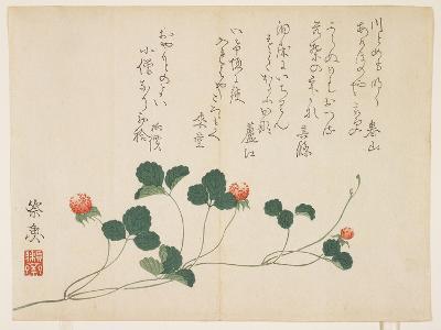 Raspberries- Saigyo-Giclee Print