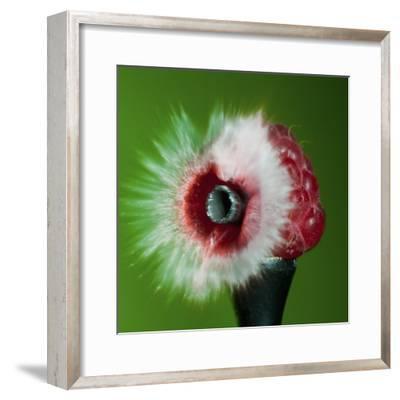Raspberry Impact-Alan Sailer-Framed Photographic Print