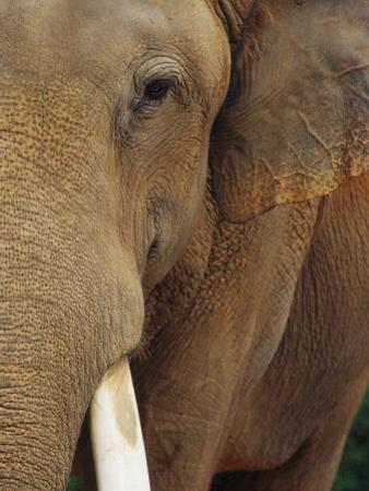 A Close View of the Face of an Elephant by Raul Touzon