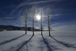 Backlit Trees Cast Shadows on a Winter Landscape by Raul Touzon