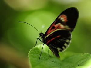 Close Up of a Butterfly on a Leaf by Raul Touzon