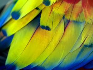 Close View of the Brightly Colored Feathers of a Tropical Bird by Raul Touzon