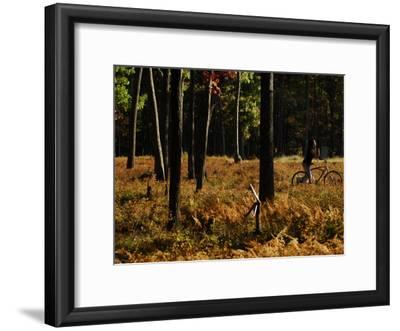 Cyclist in a Woodland in the Fall