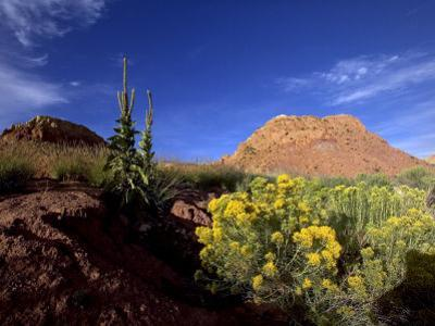 Desert Landscape with Rock Formations and Wildflowers by Raul Touzon