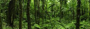 Lush Vegetation in El Yunque National Forest by Raul Touzon