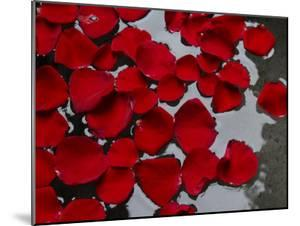 Red Rose Petals Floating on the Surface of Water by Raul Touzon