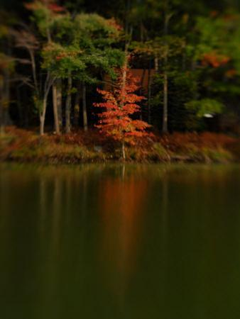 Reflections of Trees in a Lake in the Fall, Pocono Mountains, Pennsylvania by Raul Touzon