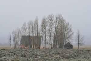 Snow Falling at the John Moulton Homestead and a Barn Behind a Stand of Trees by Raul Touzon