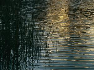 Sunlight Reflects on Rippled Water with Silhouetted Grasses by Raul Touzon