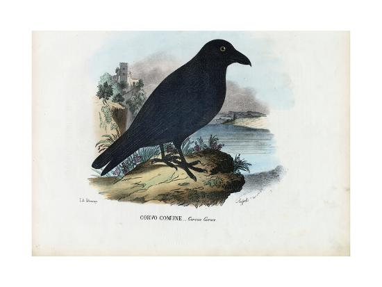 Raven, 1863-79-Raimundo Petraroja-Giclee Print