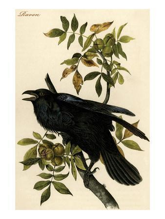 https://imgc.artprintimages.com/img/print/raven_u-l-pgfx2e0.jpg?p=0