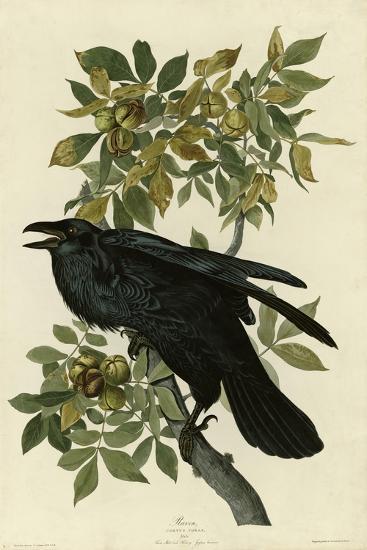Raven--Giclee Print