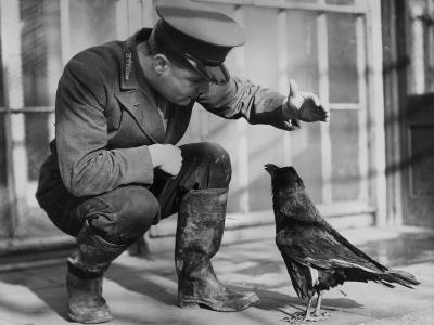 Raven--Photographic Print