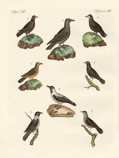 Ravens, Crows and Daws--Giclee Print