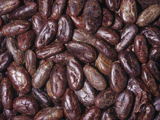 Raw, Whole Cacao Beans, the Source of Chocolate (Theobroma Cacao)Native to Tropical South America-Ken Lucas-Photographic Print