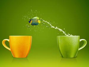 Angelfish Jumping Out of Cup with Water Splashes and Acrobatic Movement by Rawan Hussein