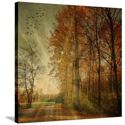 Ray Fall-Philippe Sainte-Laudy-Stretched Canvas Print
