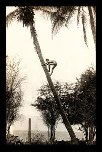 Climbing for Coconuts - Boy climbing a Coconut Tree - Lahaina, Hawaii USA by Ray Jerome Baker